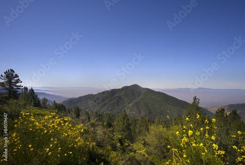 San Bernardino National Forest, Ca,USA Canvas Print