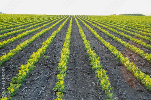 Fotografie, Obraz  Soybean seedlings
