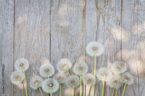 Staande foto Paardebloem Dandelion flowers on wood