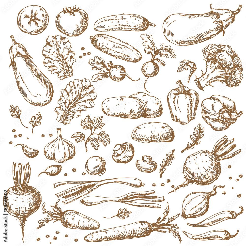 Sketch of Vegetables Set