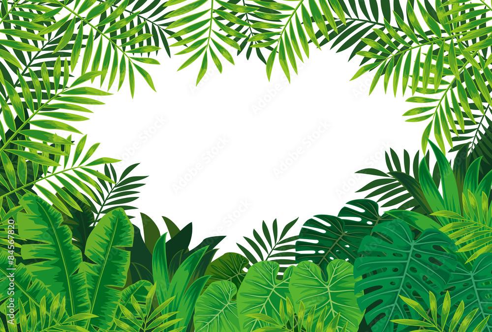 Fototapeta 熱帯雨林