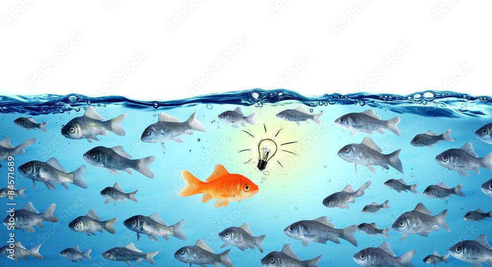 Fototapeta against the stream - opposite concept - leader goldfish