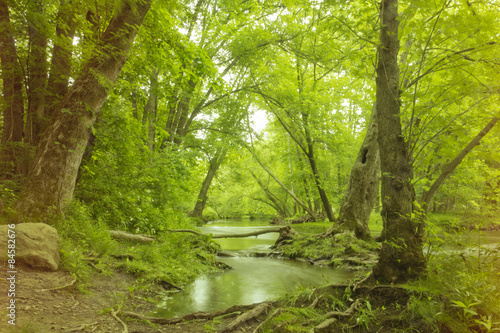 Fotografie, Obraz  Magical Forest Swamp