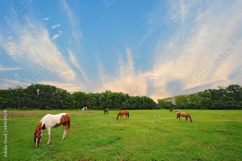 Maryland Horse Ranch at sunset