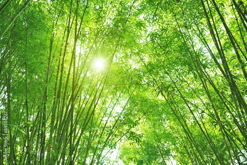 Foto op Plexiglas Bamboe Bamboo forest and sun light