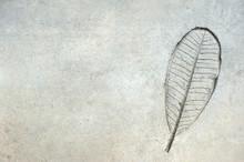 Leaf Pattern On Concrete Backg...