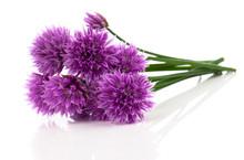 Purple Allium Onion Flower Iso...