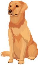 Labrador Retriever - Dog Breed