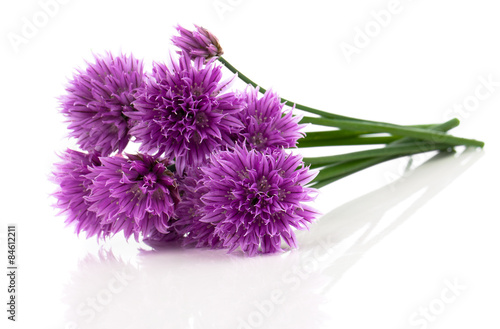 purple allium onion flower isolated on white Canvas Print
