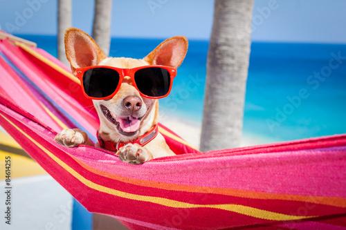 Fotografering  dog summer hammock