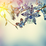 Fototapeta Orchid - Floral background of tropical orchids, butterfly