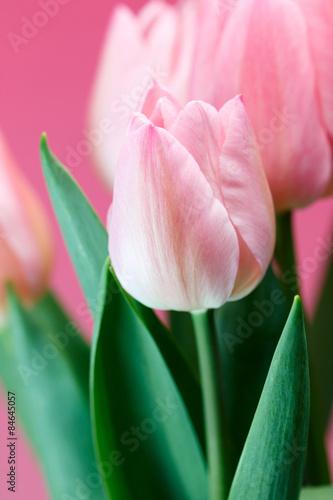 Garden Poster Lotus flower チューリップ