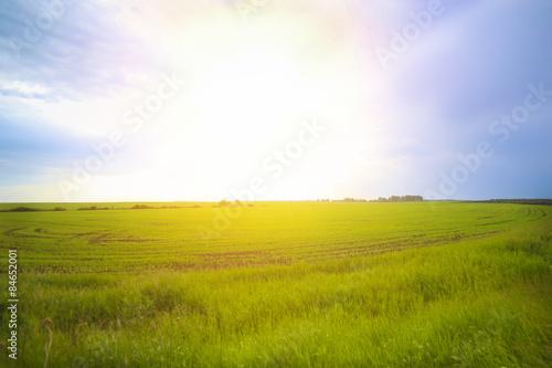 Foto auf AluDibond Beige spring sunset