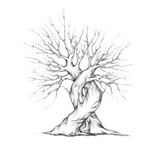 Zwei Verschlungene Bäume