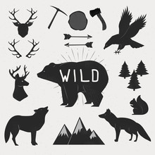 Hand Drawn Wild Animals And Objects Set