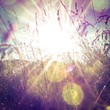 canvas print picture - Sun rays on a meadow