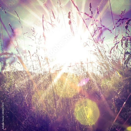 Fotografie, Obraz  Sun rays on a meadow