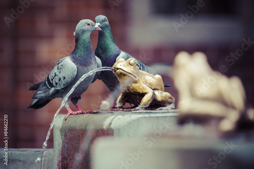Fotografia Two pigeons and Fountain with golden lucky frog - the symbol of