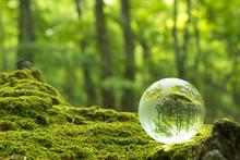 森林と透明な地球儀