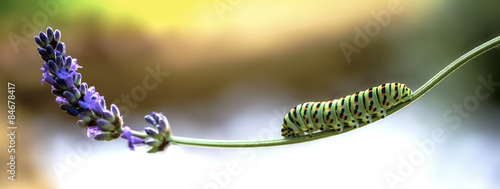 Fotografía  butterfly e flower