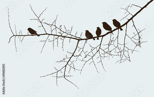 birds on a twig Wallpaper Mural