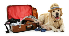 Cute Labrador With Suitcase Is...