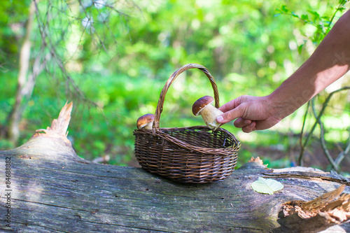 Wicker basket full of mushrooms in a forest Canvas Print