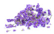 Bunch of purple flowers on white background