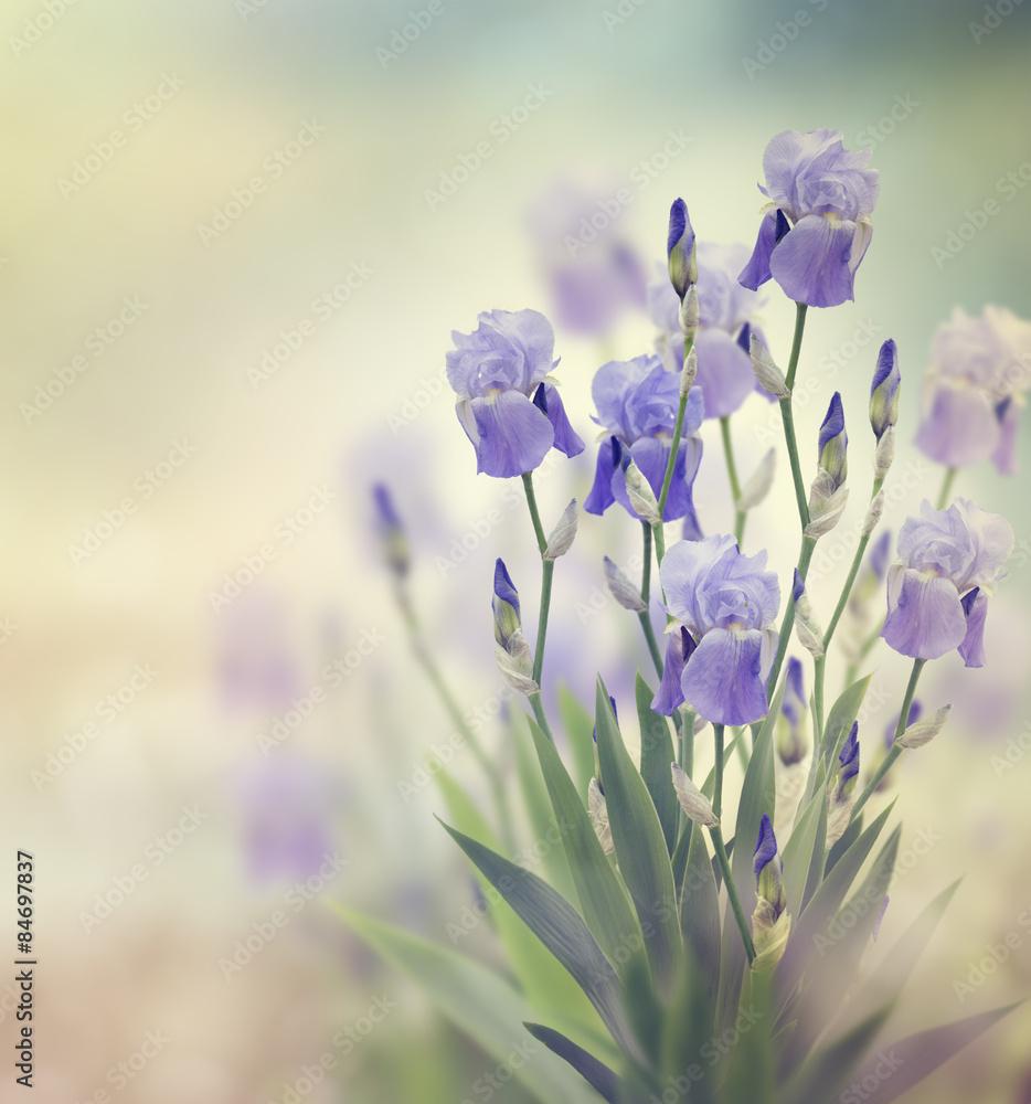 Fototapety, obrazy: Irysowe Kwiaty