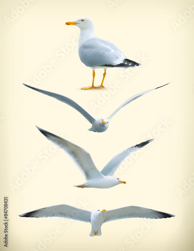 Sea gulls vector icon set Wall mural