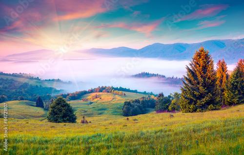 Foto op Aluminium Zalm Sunny summer morning in the foggy Carpathian mountains.
