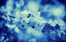 Blue Vintage Blossom Apple Tree. Spring Natural Background