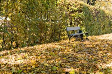 Pusta ławka w jesiennym parku.