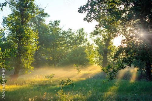 Foto op Plexiglas Landschappen morning in forest