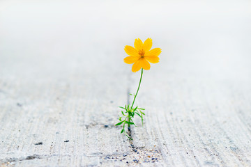 yellow flower growing on crack street.