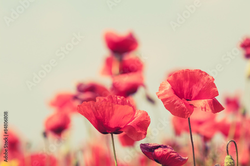 Poster Bestsellers Poppy flowers retro peaceful summer background