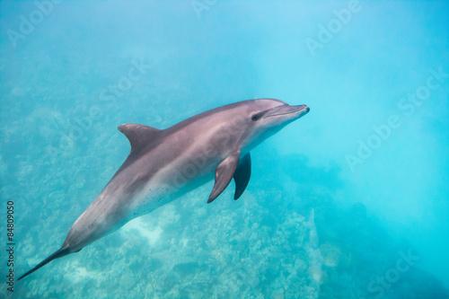 Foto op Plexiglas Dolfijn Dolphin under water