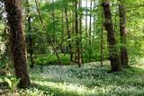Zakwitnięty las
