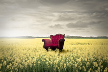 Red Chair In A Field Of Yellow Flowers