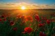 Sunrise fields of poppies