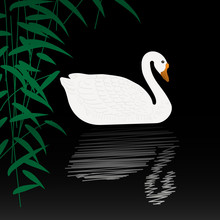 Beautiful Swan Vector Illustration. White Swan Swimming Gracefully In The Pond. White Swan On Black Water With Reflection