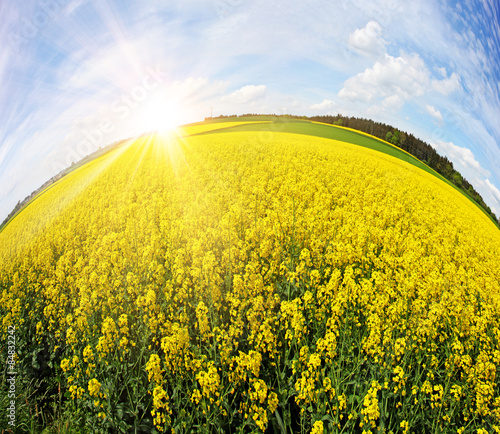 Fotobehang Zwavel geel Blühende Rapsfelder bereichern unsere Kulturlandschaft