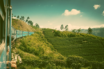Fototapeta na wymiar train from Nuwara Eliya to Kandy among tea plantations in the hi