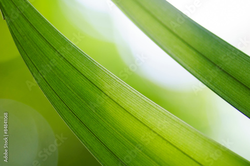 Green leaf on background picture #84841068