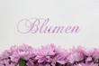 Blumen, Schrift und Blumen auf weissem Hintergrund
