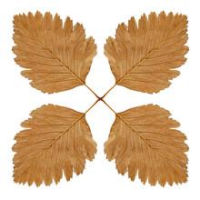 Four Autumn Leaf Kaleidoskope.Isolated.