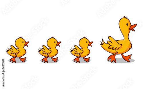 Ducks in a row Poster Mural XXL