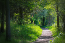 Lush Green Walk Way In The Park