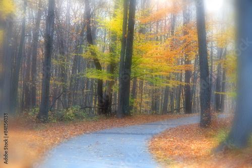 Fotobehang Natuur Beautiful autumn trail in Michigan
