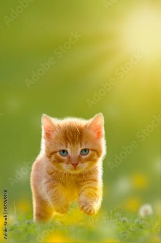 fototapeta na szkło Junge über eine Katze springt Wiese